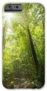 Sunny Forest Path IPhone Case by Elena Elisseeva