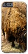 The American Buffalo IPhone Case by Bill Cannon