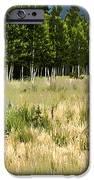 The Meadow Digital Art IPhone Case by Phyllis Denton