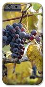 The Vineyard IPhone Case by Linda Mishler