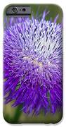 Thistle I IPhone Case by Tamyra Ayles