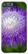 Thistle II IPhone Case by Tamyra Ayles