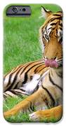 Tiger IPhone Case by Carlos Caetano