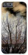 Touch Of Frost IPhone Case by Will Borden