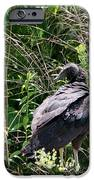 Turkey Vulture - Buzzard IPhone Case by EricaMaxine  Price