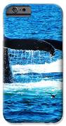 Two Whale Tails IPhone 6s Case by Paul Ge