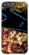 Velvet Sea Slug IPhone Case by Dant� Fenolio