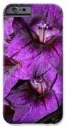 Violet Glads IPhone Case by Susan Herber