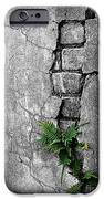 Wall Ferns IPhone Case by Perry Webster