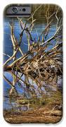 Waterlogged Tree IPhone Case by Douglas Barnard