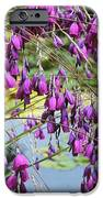 Wedding Bells (dierama Pulcherrimum) IPhone Case by Adrian Thomas