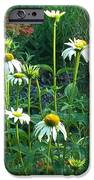 White Daisies And Garden Flowers IPhone Case by Thelma Harcum
