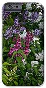 Winning Color IPhone Case by Susan Herber