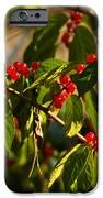 Winter Bird Treet IPhone Case by LeeAnn McLaneGoetz McLaneGoetzStudioLLCcom
