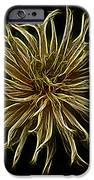 Zinnia  IPhone Case by Sandy Keeton