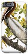 Audubon: Pelican IPhone Case by Granger