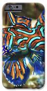 Tropical Fish Mandarinfish IPhone Case by MotHaiBaPhoto Prints