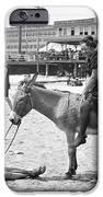 Atlantic City: Donkey IPhone Case by Granger