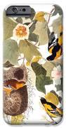 Audubon: Oriole IPhone Case by Granger
