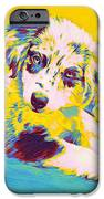 Aussie Puppy-yellow IPhone Case by Jane Schnetlage