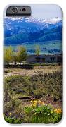 Balsamroot Flowers And North Cascade Mountains IPhone Case by Omaste Witkowski