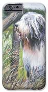 Bearded Collie With Cardinal IPhone Case by Lee Ann Shepard