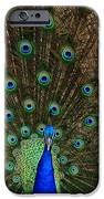 Beautiful Peacock IPhone 6s Case by Larry Marshall