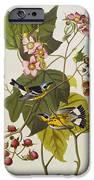 Black And Yellow Warbler IPhone Case by John James Audubon