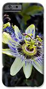Blue Passion Flower IPhone Case by Kelley King