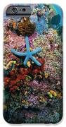 Blue Starfish On Coral Reef, Raja IPhone Case by Beverly Factor