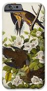 Carolina Turtledove IPhone Case by John James Audubon
