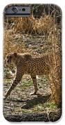 Cheetah  In The Brush IPhone Case by Douglas Barnett