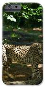 Cheetah On The In The Forest 2 IPhone Case by Douglas Barnett