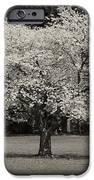 Cherry Blossom Tree - Ocean County Park IPhone Case by Angie Tirado