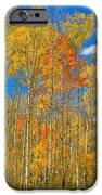 Colorful Colorado Autumn Landscape IPhone Case by James BO  Insogna