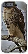 Cooper's Hawk 2 IPhone Case by Joe Faherty
