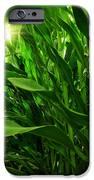 Corn Field IPhone 6s Case by Carlos Caetano