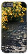 Dappled Light IPhone Case by Suzanne Gaff
