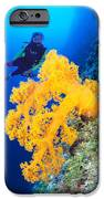Diving, Australia IPhone Case by Dave Fleetham - Printscapes