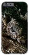 Eye In Eye IPhone Case by Joerg Lingnau