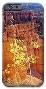 Fall In Bryce Canyon IPhone Case by Marty Koch