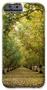 Fall Orchard IPhone Case by Kathy Yates
