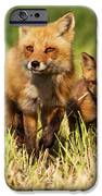 Fox Family IPhone Case by Mircea Costina Photography