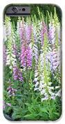 Foxglove Garden IPhone Case by Carol Groenen
