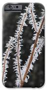 Frosty Branches IPhone Case by Carol Groenen