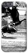 Geese On Ice Taking Flight IPhone Case by Bill Cannon