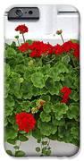 Geraniums On Window IPhone Case by Elena Elisseeva