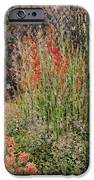 Gladioli IPhone Case by Claude Monet