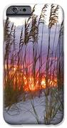 Golden Amber IPhone Case by Janet Fikar