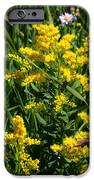 Golden October IPhone Case by Christine Till